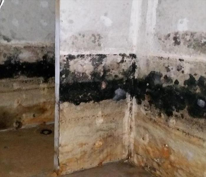 Residential Home in Mundelein Full of Mold