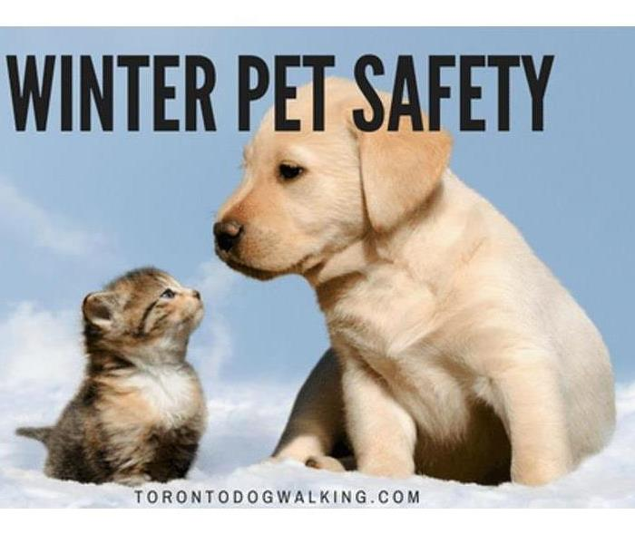 Community Winter Safety Tips for your Pets!