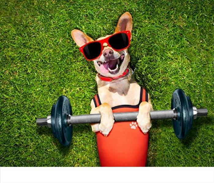 Community Canine Fitness Month